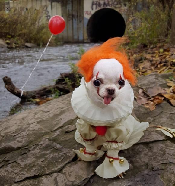 映画「IT」のペニーワイズのコスプレをした犬があまりにも出来すぎていたのでコラ職人頑張る
