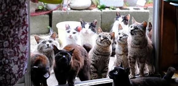 世界10の猫マニアと猫好きを魅了する場所