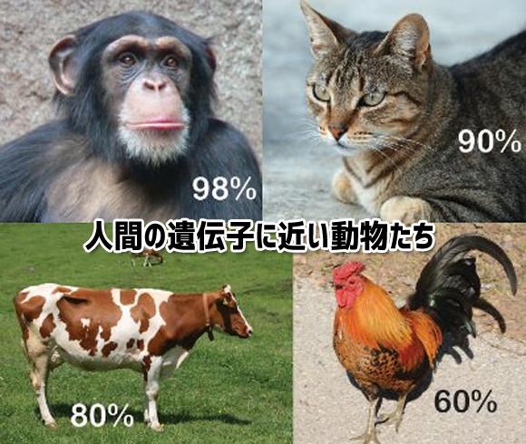 猫はかなり人間に近かったのか!人間と遺伝子の構造が近い10のもの