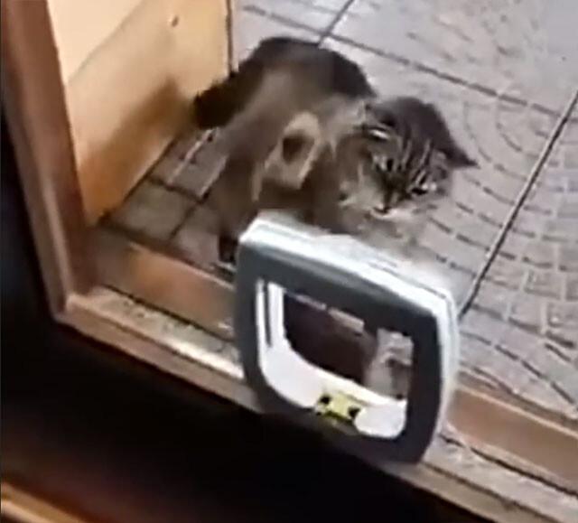 なんじゃこりゃ!はじめての猫用ドアにブチ切れる猫