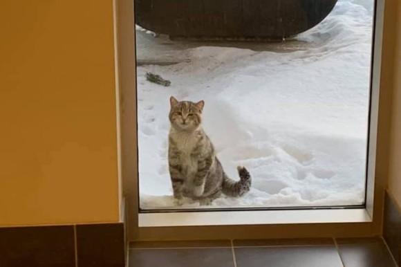 「寒いんです。保護してください」消防署の入り口で助けを求めた野良猫のハッピーエンド物語(カナダ)