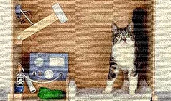 猫 シュレ デイ ンガー の