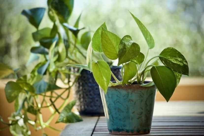 plants-3816945_640_e
