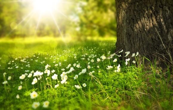 spring-276014_640_e