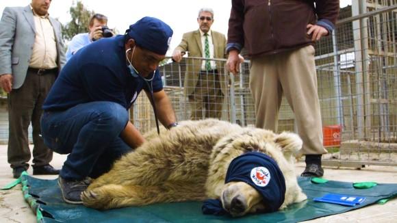 戦場に取り残された動物園の動物たちを救うため、危険地域を飛び回る日々を送るヨルダンの獣医師たちの物語