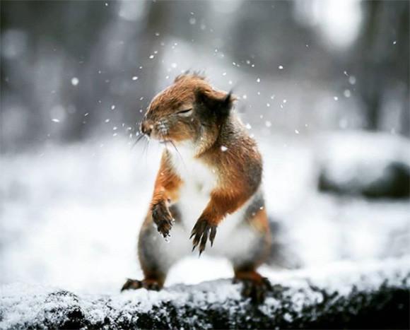 おとぎの国はここですか?ファンタジー世界を満喫できるフィンランドの森の動物たちの写真