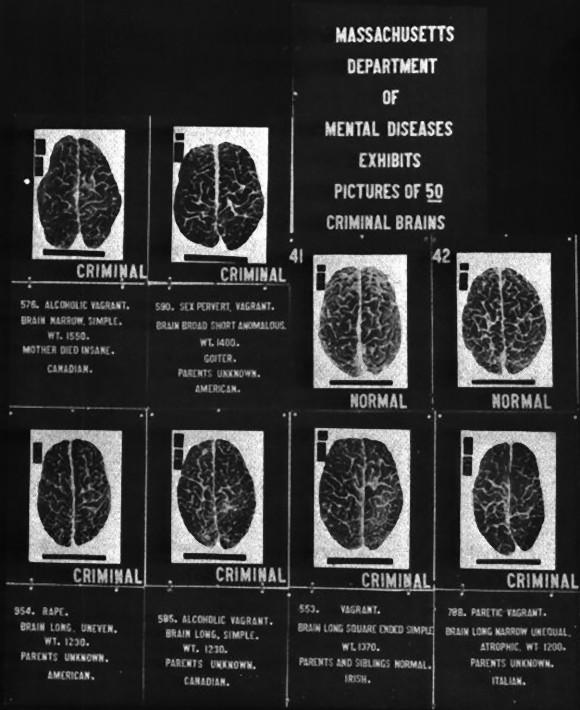 489px-Criminal_brains_e