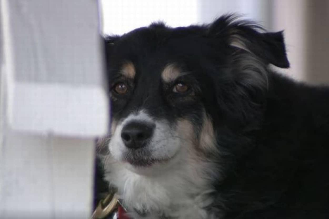 犬が5億円の遺産を相続