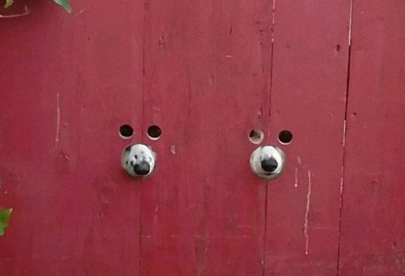 ただならぬ視線を感じたら・・・顔出しパネルに顔突っ込んだみたいな2匹の犬が!!