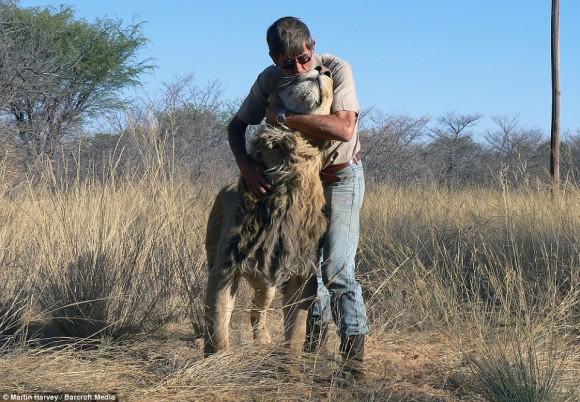 ライオンと人間に芽生えた深い絆。11歳のライオンとおじいさんの友情物語