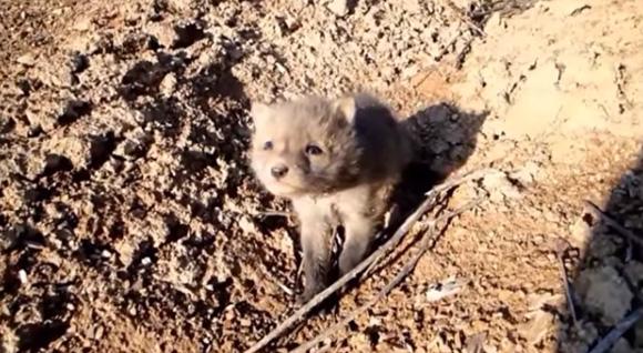 「出会いと別れ」 傷ついてボロボロになっていたキツネの子を保護して野生に帰すまでの記録映像