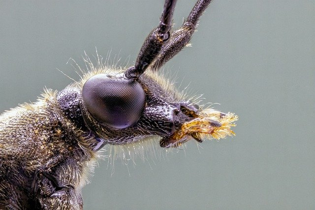 spotted-longhorn-4301627_640