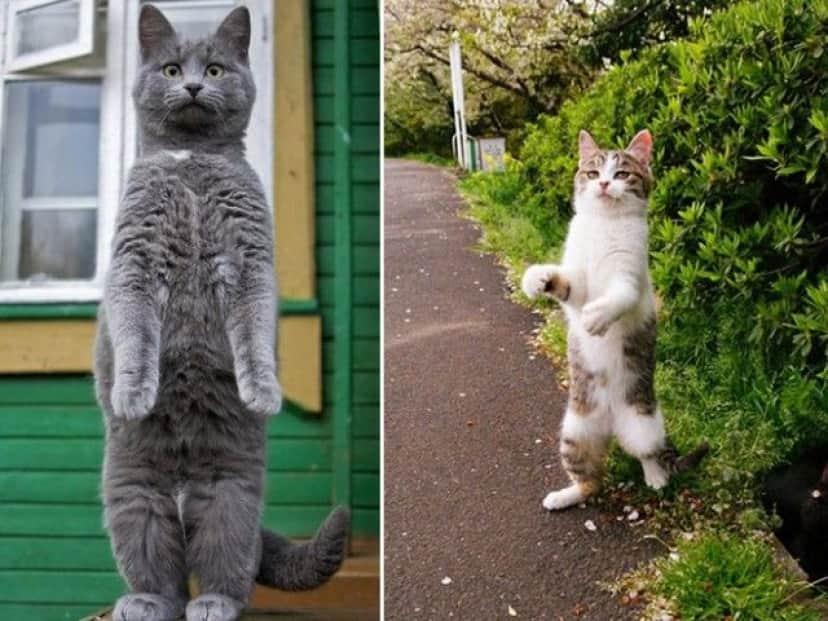 standing-cats11_e