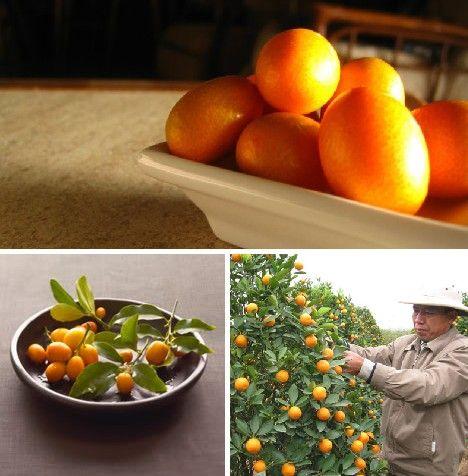 amazing_fruits_8x