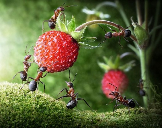 ants_27