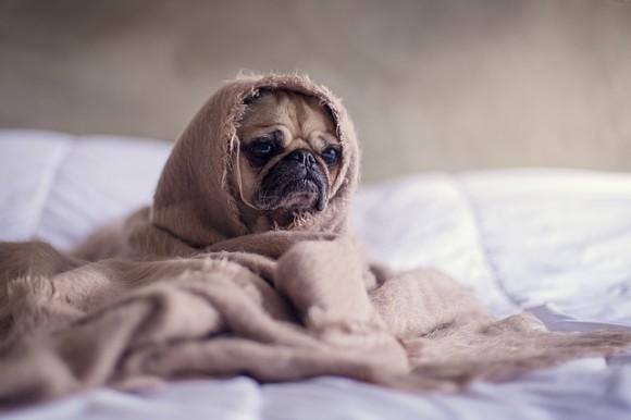 税金未払い分を徴収するため、飼い犬を押収。オークションサイトで販売したドイツの都市
