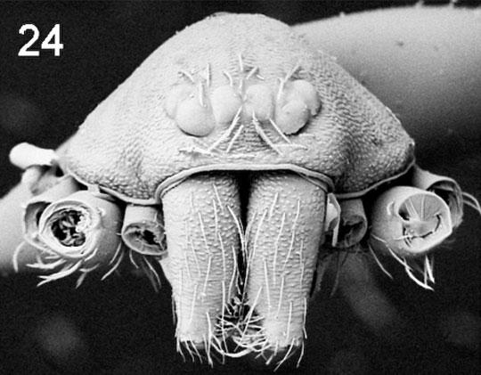 091029-06-new-species-austr
