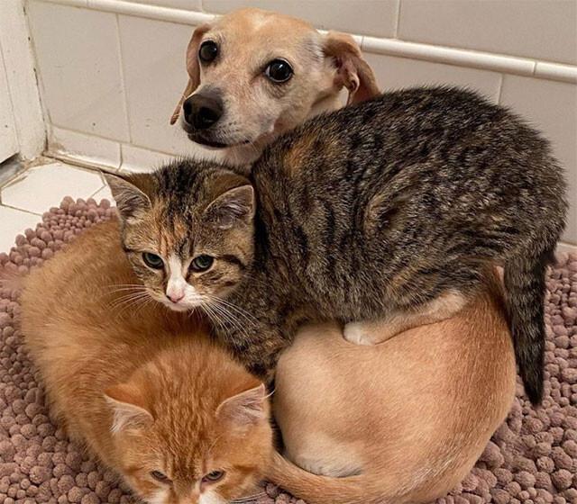 どんな子でもなついてしまう聖母犬。人見知りが激しい2匹の子猫がすぐに陥落(アメリカ)