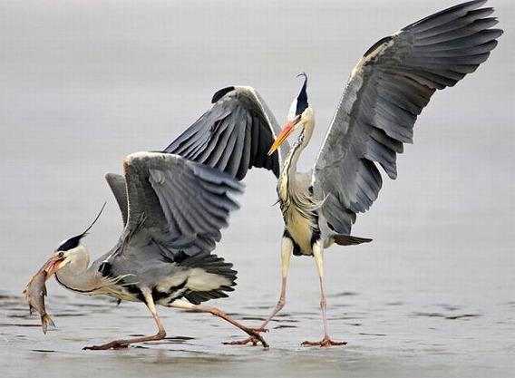 beautiful_photographs_of_birds_16