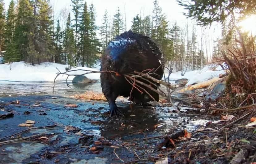 ケベック州の野生動物たちの春