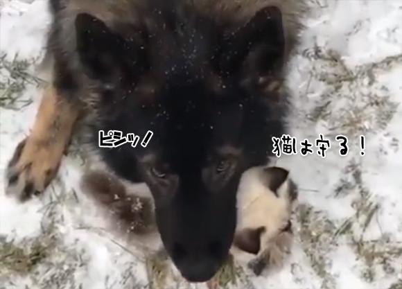 引退した警察犬は新たなる使命を見つけた。それは猫を守りぬくこと。