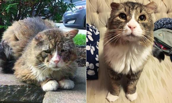 厳しい寒さで凍傷を負いボロボロになっていた猫。ようやく保護されあたたかい家庭の元へ(カナダ)