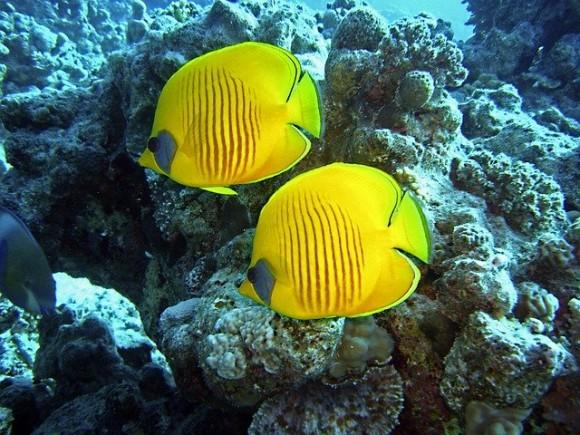 diving-1656619_640_e