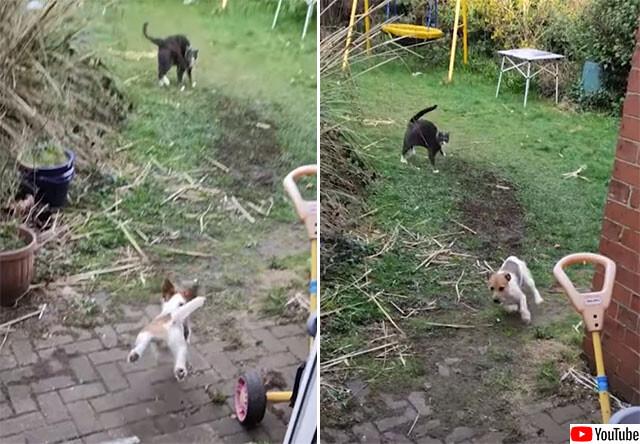 隣の猫が庭に!勇気りんりんで追い払おうとした犬の末路