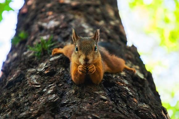 木にぶらさがって食事をするリス