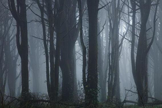fog_12