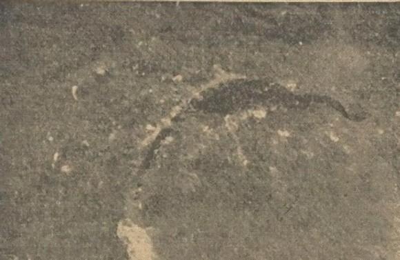 """巨大生物なのか?飛行機から撮影された""""海の怪獣\"""