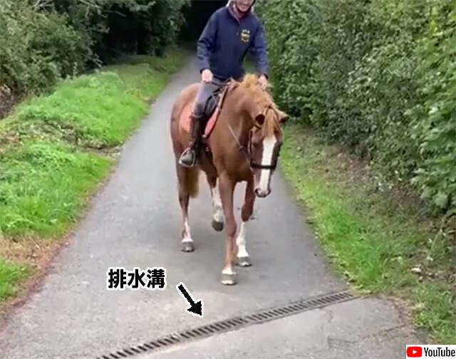 怖い怖い、排水溝が怖い。なぜか排水溝の上を歩けない馬