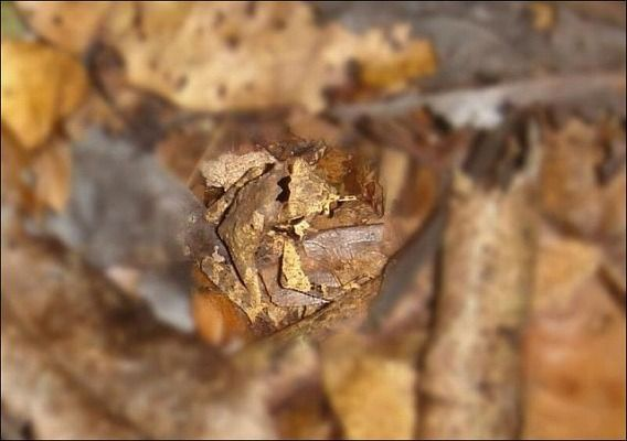 find_a_frog_640_04