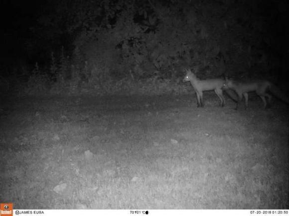 fox-3 [www.imagesplitter.net]
