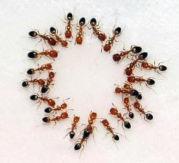 ants-philippines