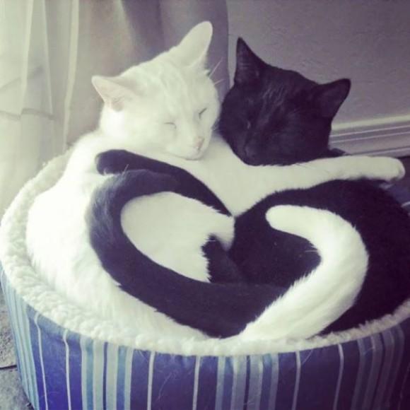 セットだと無敵にかわいい、イン&ヤンな白い猫と黒い猫