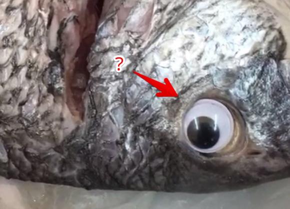 新鮮に見えるだろ?鮮度アップを狙って魚にプラスチックの目玉を付けて販売した鮮魚店が営業停止処分に(クウェート)