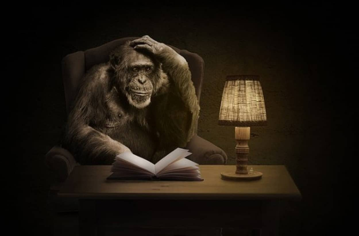 monkey-1757972_640_e
