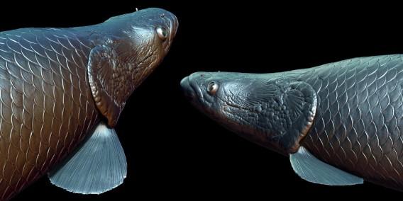 ピラニアから身を守るため、古代魚ピラルクは鋼鉄の鎧を身に着けた。身を守るために進化したピラルクのうろこ(米研究)