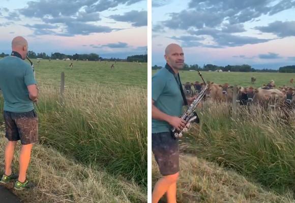覚えたての曲を披露したくて、牛にサックス弾いてみた。牛たちは熱心に耳を傾けてくれる良い聴衆だった(アメリカ)