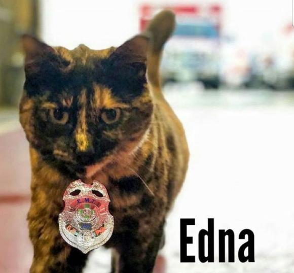 子猫時代に保護し、以来消防署でずっと飼われていた猫のエドナに匿名の立ち退き要求。その顛末は?(アメリカ)