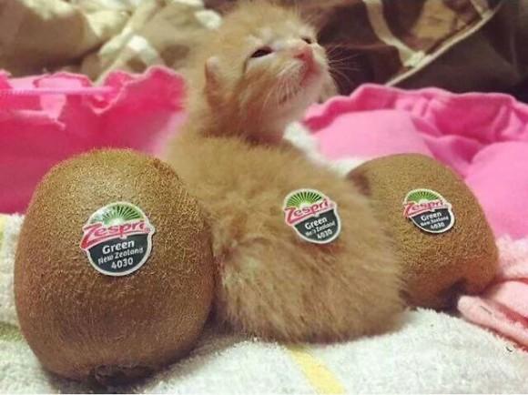 流動化だけじゃなく擬態も!猫、食品偽装疑惑のある10枚の写真