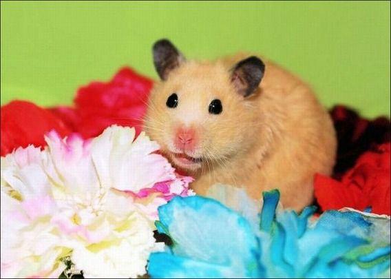 hamsters_13