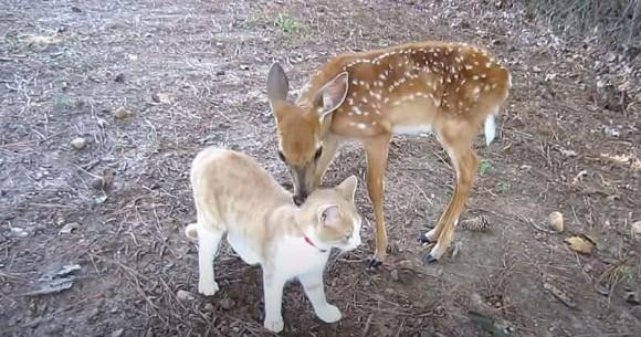 心の芯まで癒されました。子鹿を保護したところ、隣の家の猫と大親友に。体を寄せ合ってスリスリエンドレス(アメリカ)