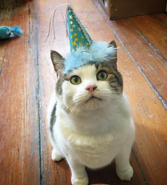 cat-9 [www.imagesplitter.net]