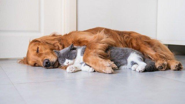 犬猫仲良し