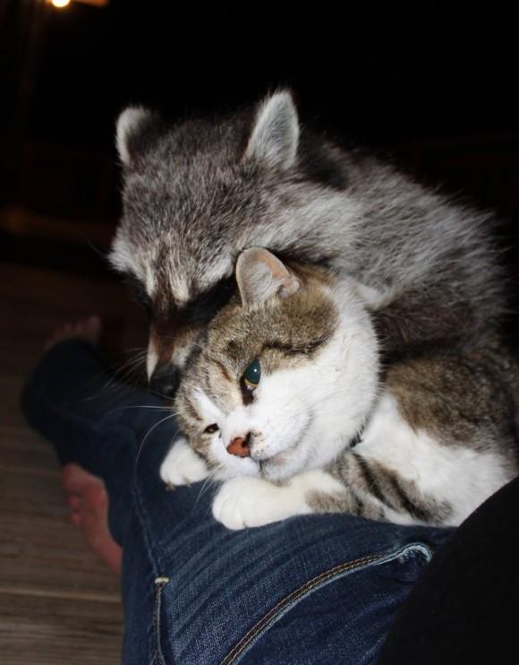 猫 全剃り