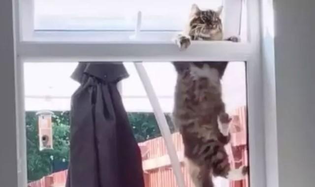 いいえ、うちの猫じゃありません