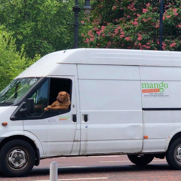 dog-5 [www.imagesplitter.net]