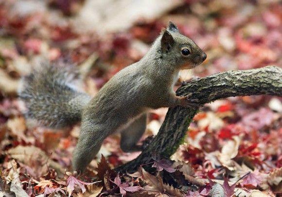 2body_japanese_squirrel_e